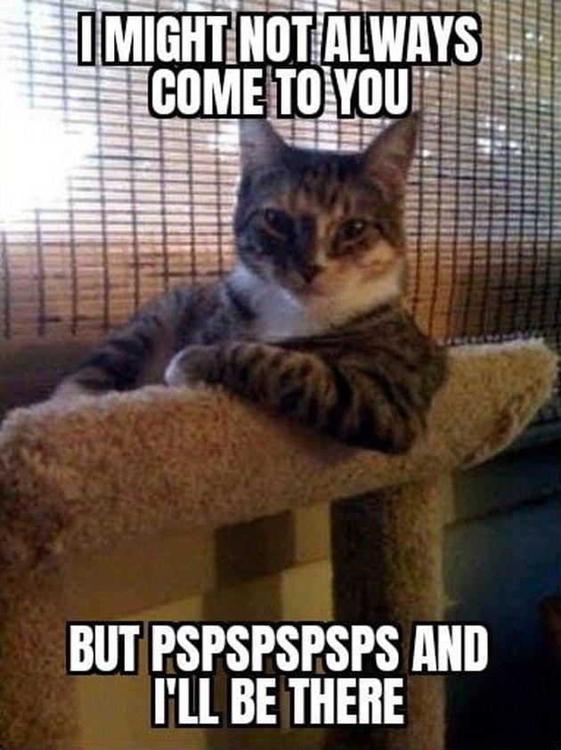 cat on cat tower