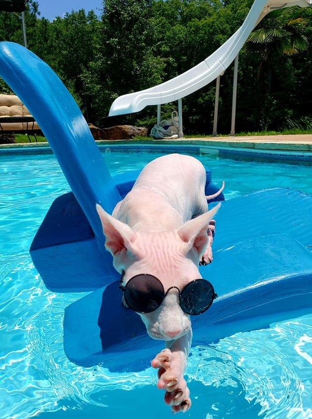 Hairless cat in sunglasses on pool float named Nudacris