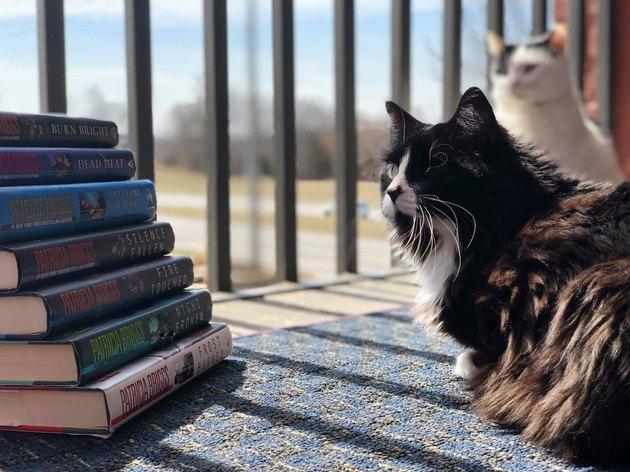 Cat named Nymphadora