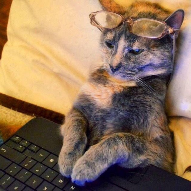 Cat wearing glasses looks at laptop screen.