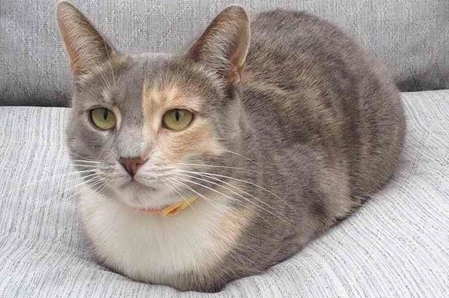 cat loaf looking calm