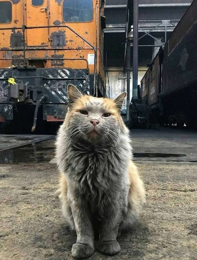 Tough looking cat in a rail yard.