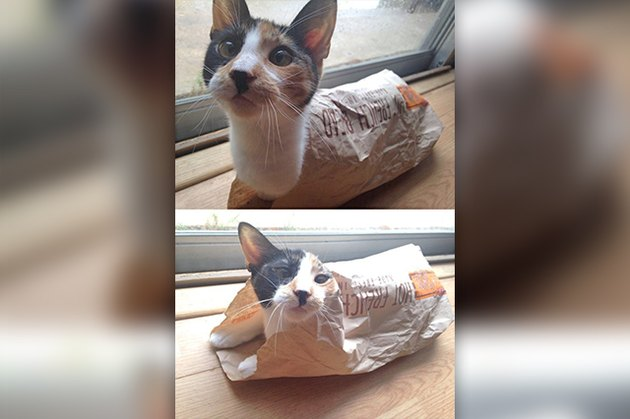 cat loaf wrapped in paper