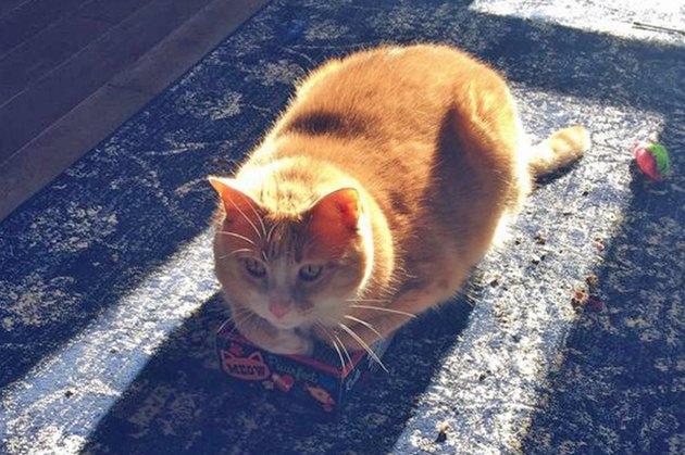 cat loaf sitting in a sunbeam
