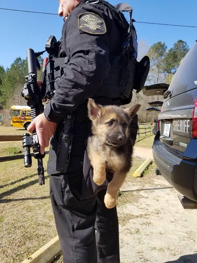 Puppy hanging from back of police officer's utility belt.