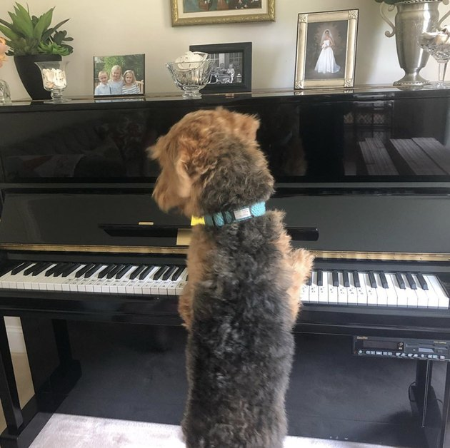 dog sitting in front of piano