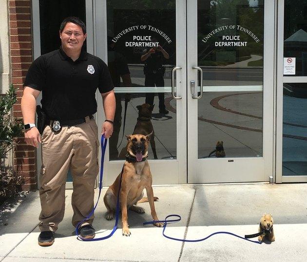 Police dog posing with stuffed animal dog.