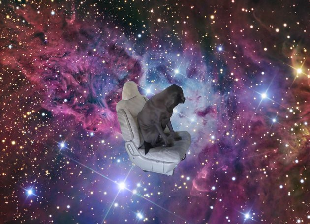 Dog in a carseat against a backdrop of a colorful galaxy