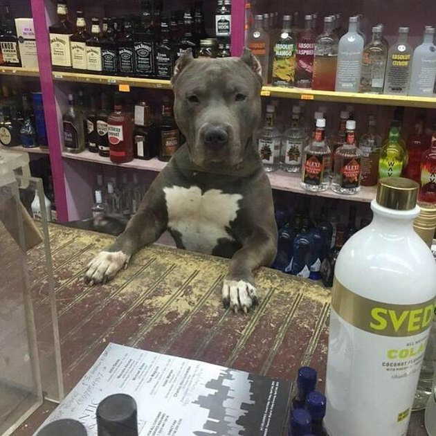 Dog behind counter of liquor store.