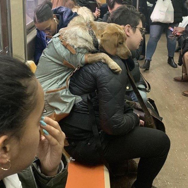 dog in bag leans over man's shoulder on train