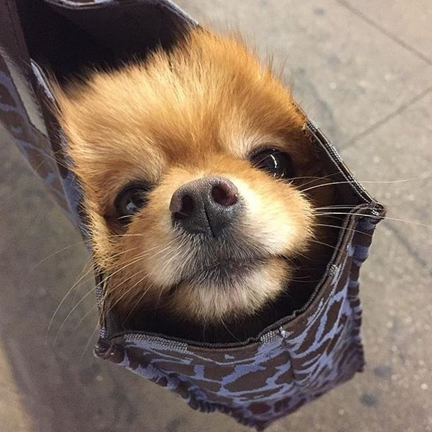 Small dog in bag on NYC train