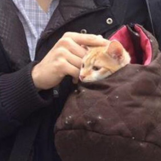 cat in bag on NYC train