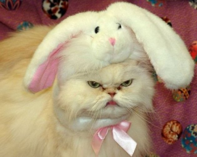angry cat wearing a bunny bonnet