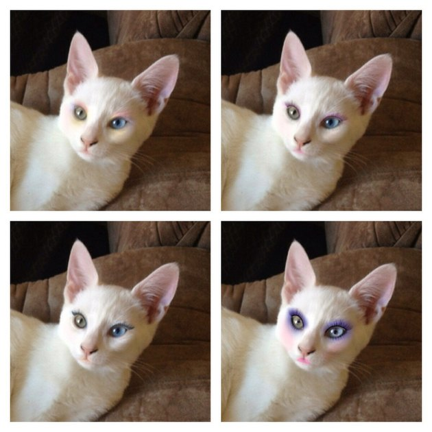 Cat wearing makeup - three pictures in different stages of makeup