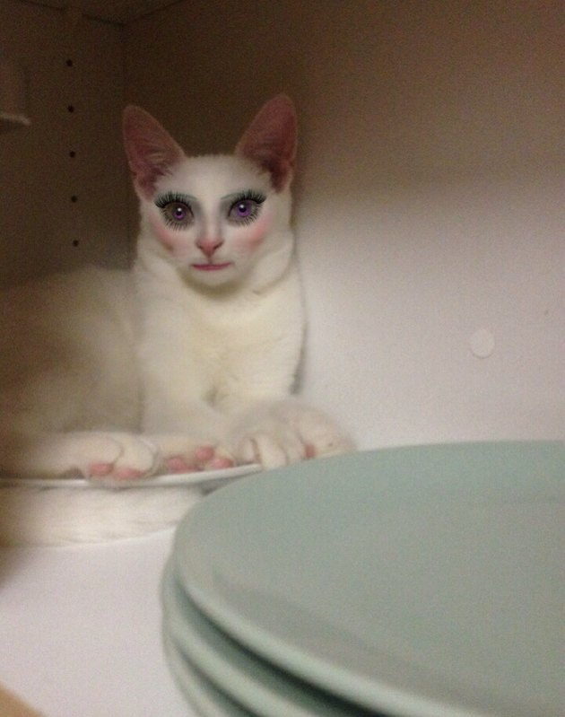 Horrifying picture of a cat that looks like a human because of a makeup app