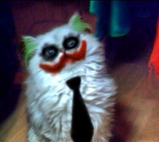 Cat with Joker makeup
