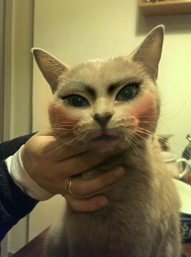 Cat with makeup looking kinda mean