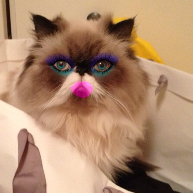 Cat with vibrant makeup
