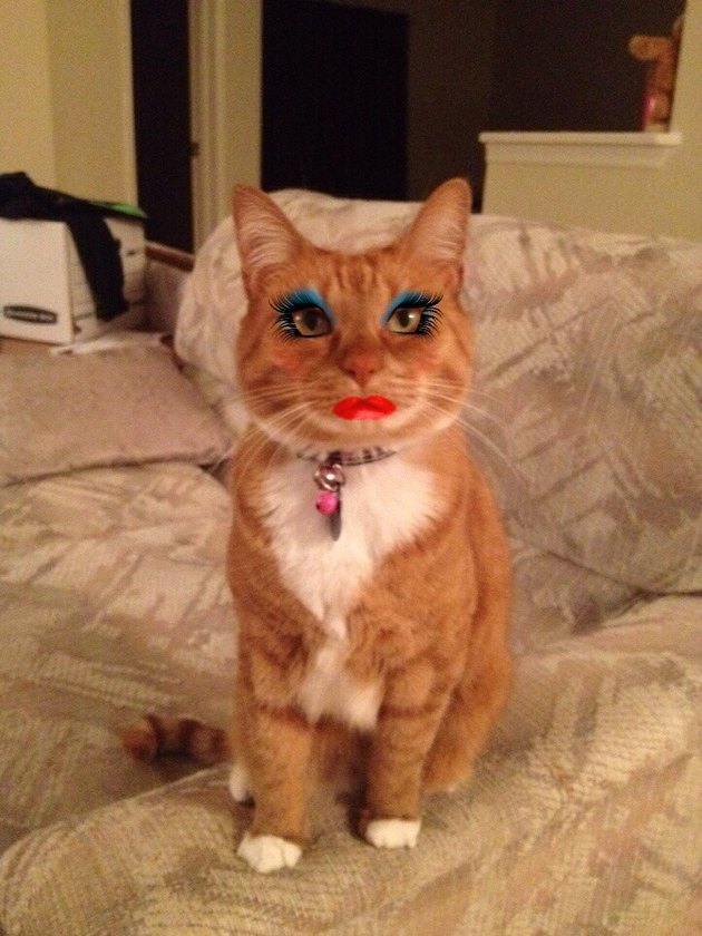 Cat with too much makeup!