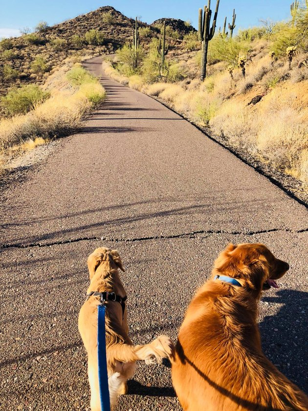 This Hero Puppy Jumped in Front of a Rattlesnake to Save His Owner