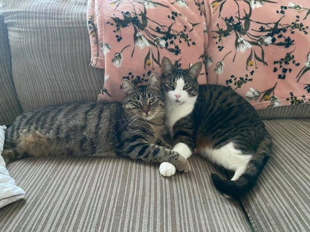 cats holding paws on couch