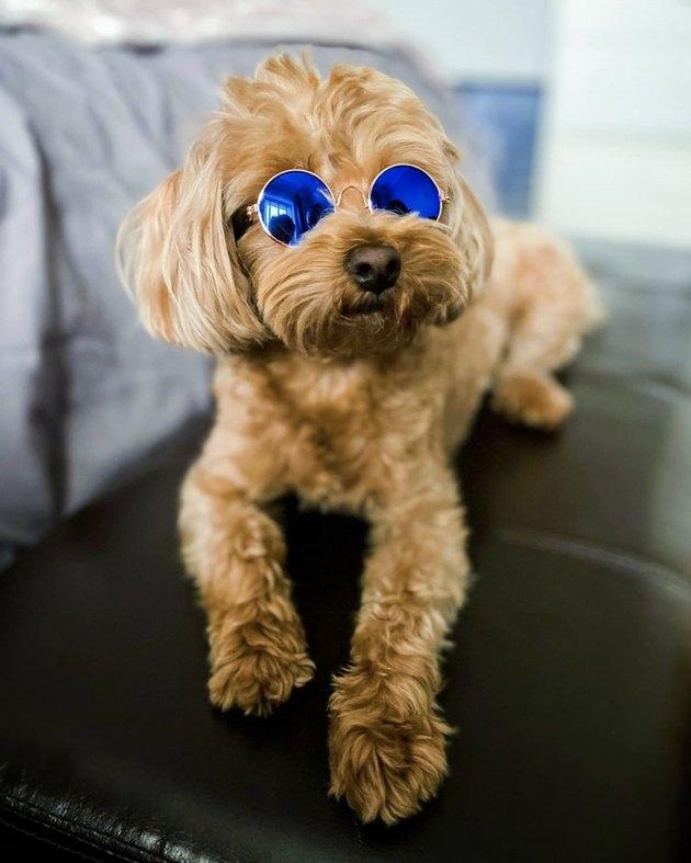 dog in blue reflective sunglasses