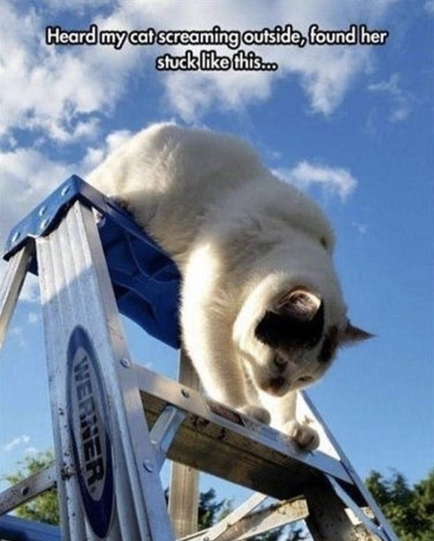 Cat stuck on a ladder