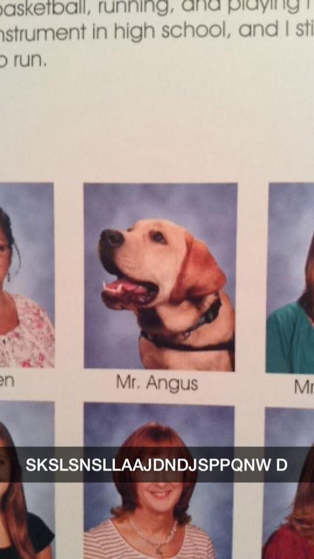 24 dogs winning all the yearbook awards and superlatives
