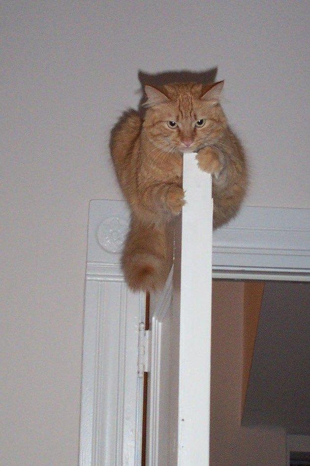 mean cat on top of door refuses help