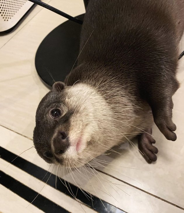 otter looking innocent
