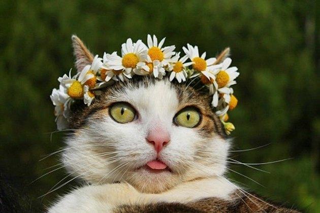 Cat wearing flower crown
