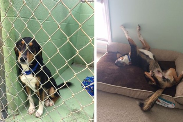 18 Adopted Dogs Who Are Coming Home For The First Time
