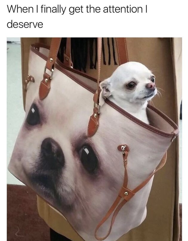 Dog in handbag that has a picture of the dog!