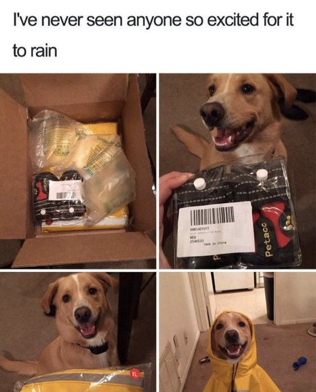 Dog really excited about rain coat