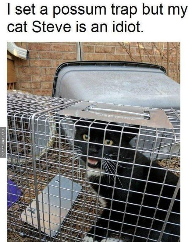 Cat got caught in a possum trap!