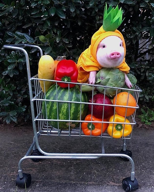 Pig in grocery cart with vegetables.