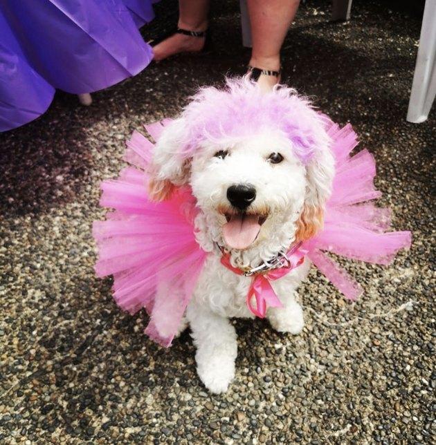 white dog in pink tutu
