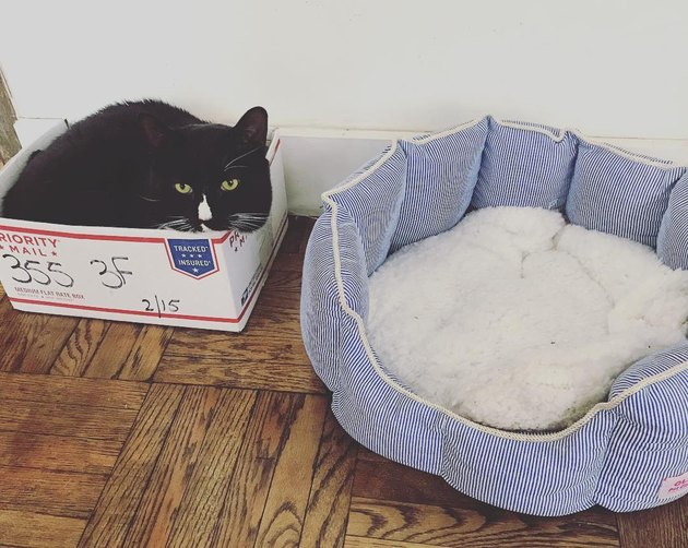 Cat sleeps in box instead of cat bed