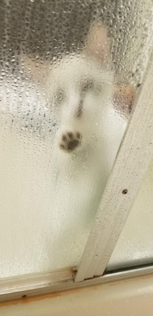 Kitten outside a shower