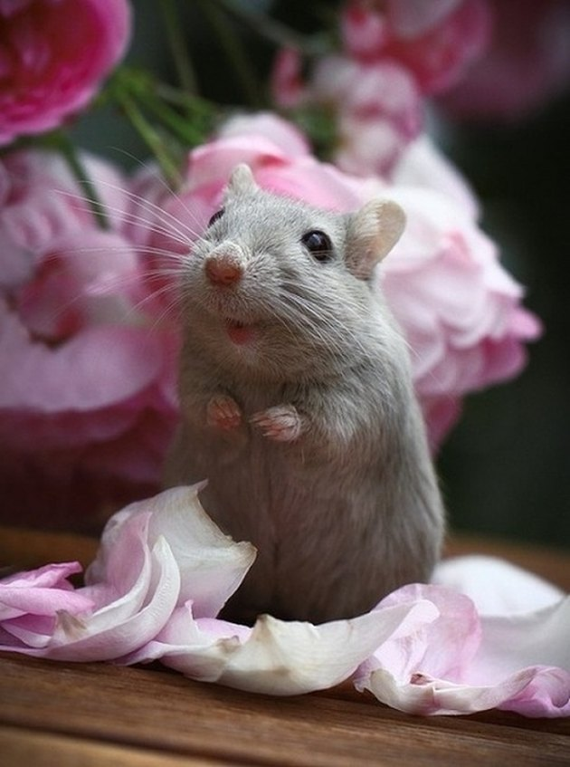 Cute mouse