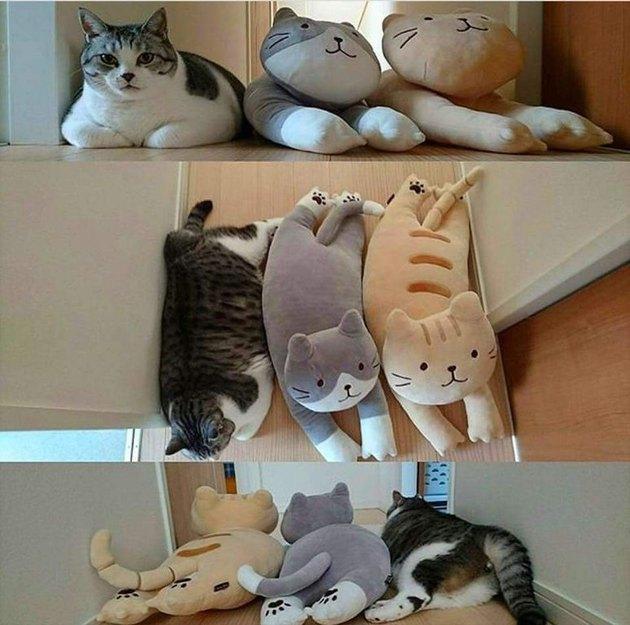 24 delightfully chubby cats
