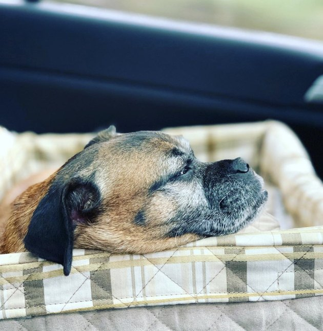dog in checkered car seat