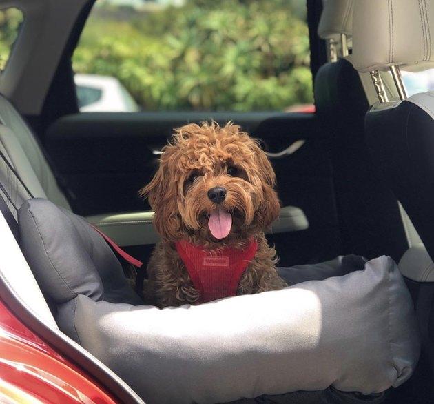 dog in gray car seat