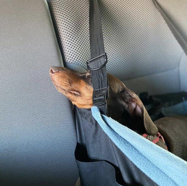 dog sleeping in car seat