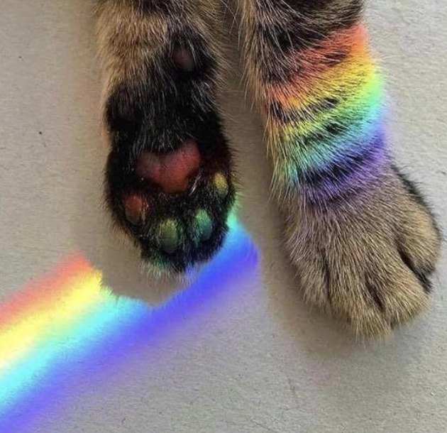 Cat with a rainbow refracting across the bottoms of its paw