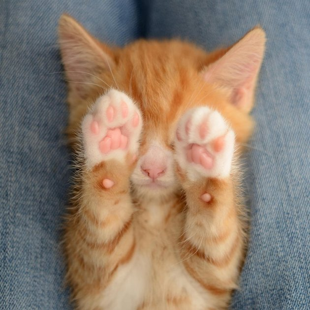 Kitten holding its paws over its eyes