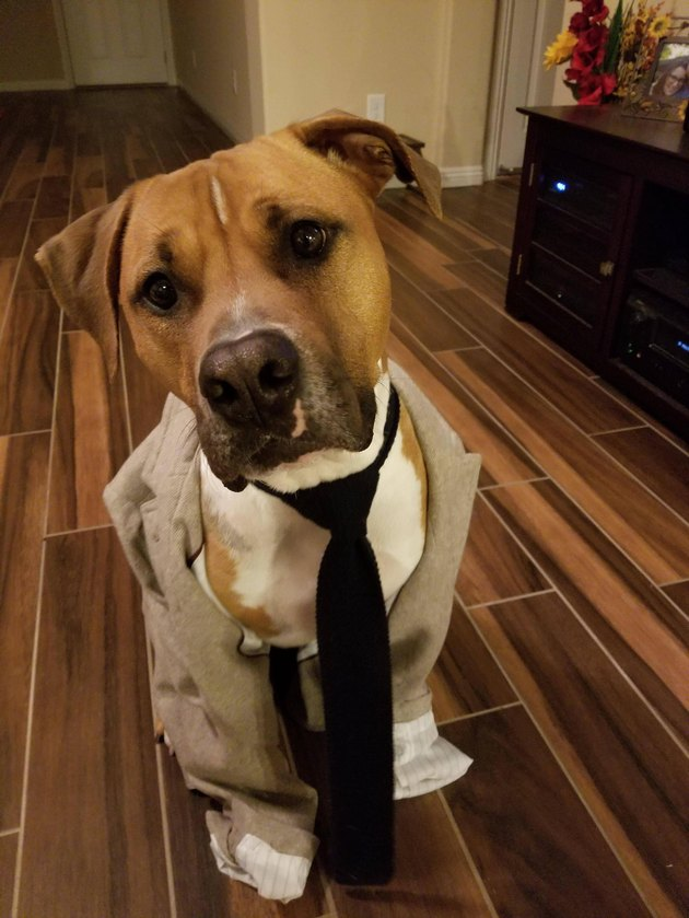 Good dog wearing a tie and jacket