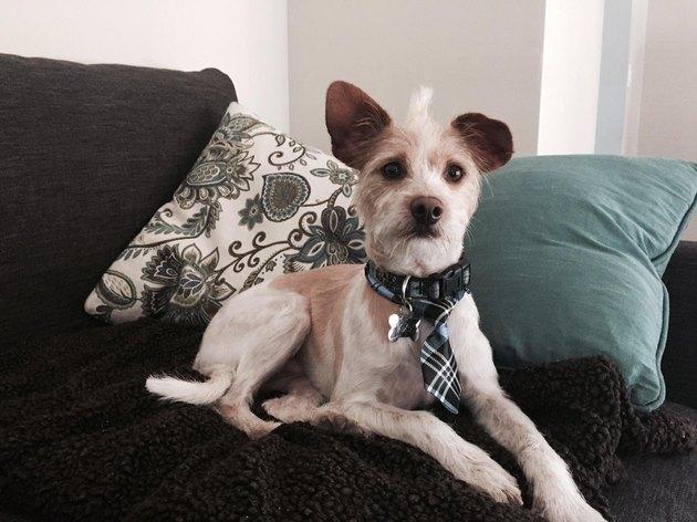 Good boy in a tie