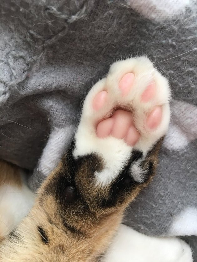 Underside of cat's paw