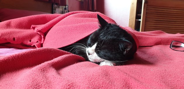 cat sleeps under soft pink blankie